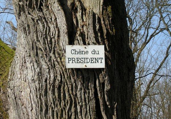 Le chêne du président