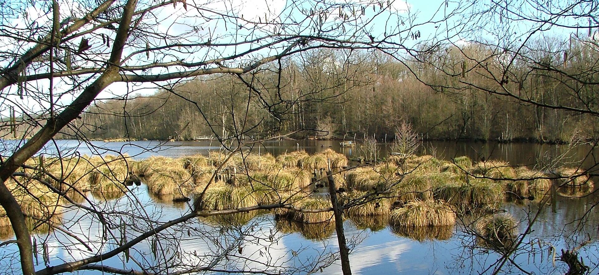 Abords de l'étang de Guiperreux - Hermeray