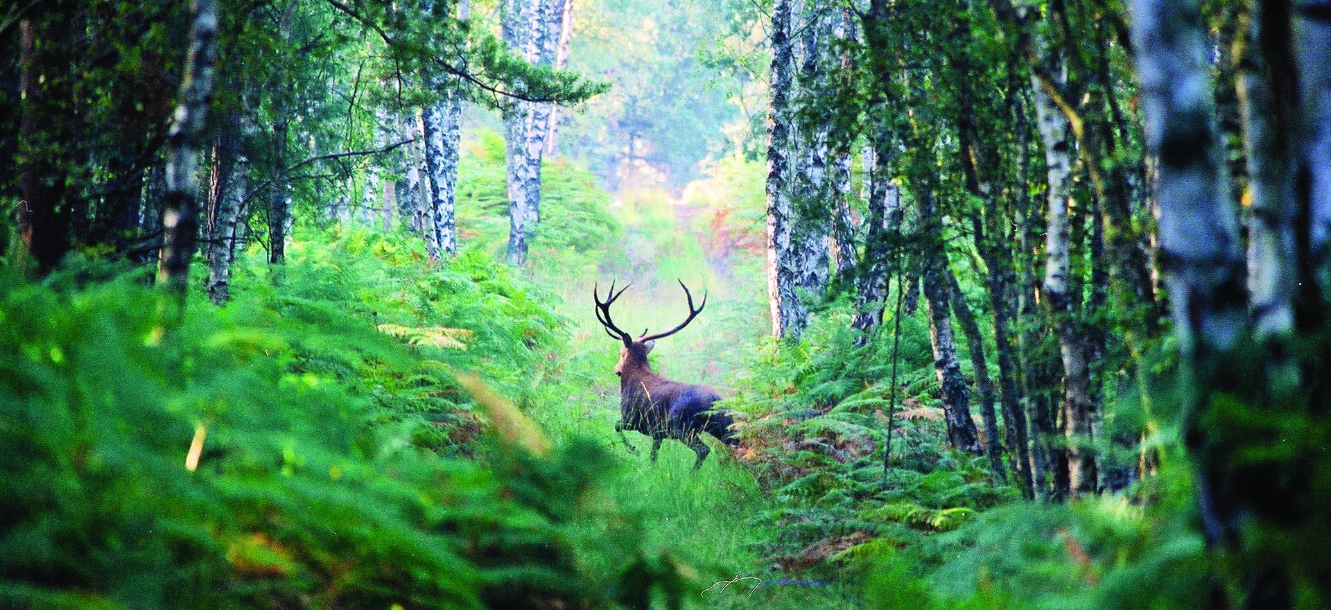 Un riche patrimoine naturel