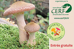 Expo champignons du CERF78