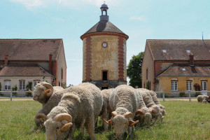 Bergerie nationale et moutons